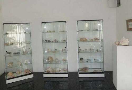 Malacological collection Omišalj